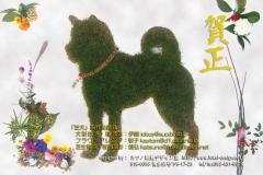 2006 柴犬