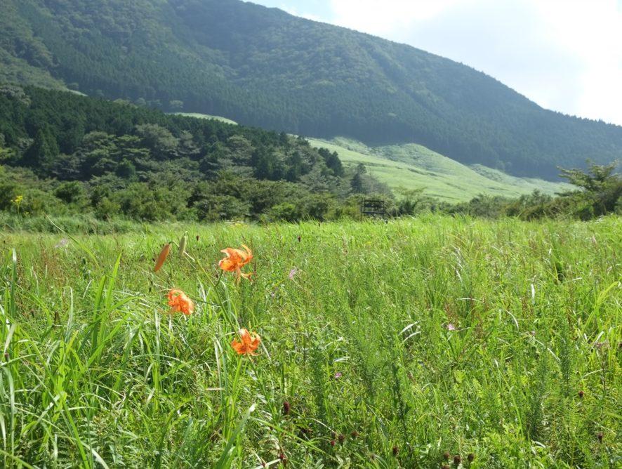 箱根湿生植物園 2019